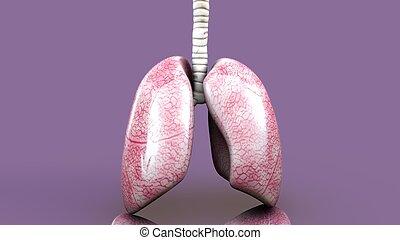 corporal, ilustração, human, pulmões, 3d