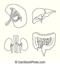 corporal, jogo, illustration., médico, objeto, isolado, vetorial, human, icon., estoque