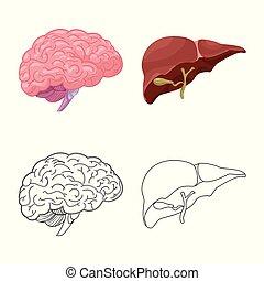 corporal, jogo, stock., médico, símbolo., ilustração, vetorial, human, ícone