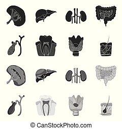 corporal, médico, objeto, web., isolado, cobrança, human, icon., símbolo, estoque