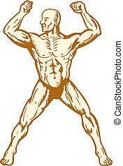 corporal, macho, construtor, anatomia, flexionar, músculo...