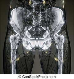 corporal, visível, ossos, transparente, human