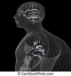 corps, coeur, fil, arrière-plan., render., cerveau, noir, humain, x-ray., modèle, 3d