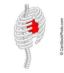 corps, coeur, isométrique, cage, côtes, anatomie, interne, 3d., côte, style., organes