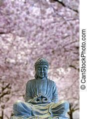 corps, entiers, séance, fleur, arbres cerise, bouddha