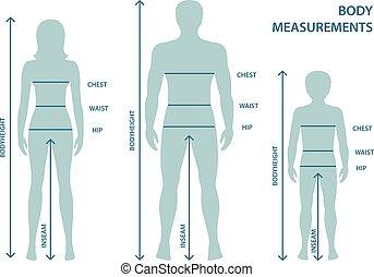 corps, garçon, entiers, measurements., parameters, tailles, silhouttes, mesure, lignes, longueur, humain, enfant, femmes, proportions., homme, mesures