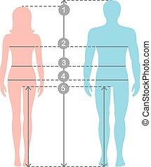corps, homme, entiers, measurements., parameters, proportions., mesures, lignes, longueur, vecteur, tailles, humain, mesure, illustration., stockage, silhuettes, dessin animé, femmes
