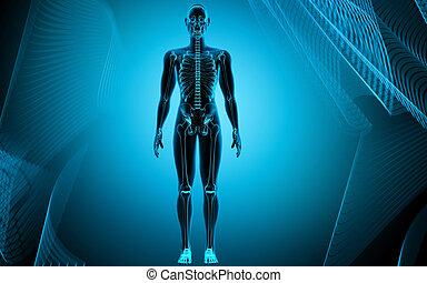 corps, humain