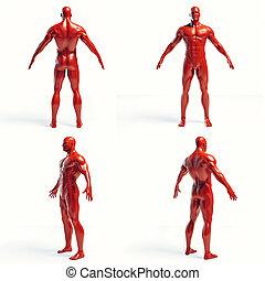 corps, humain, render, 3d