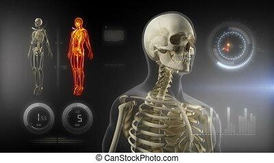 corps, interface, monde médical, écran, humain