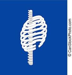 corps, isométrique, cage, côtes, anatomie, spinal, interne, ...