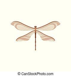 corps, libellule, paires, brun, voler, deux, plat, wings., vecteur, conception, long, petit, transparent, insect.