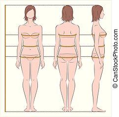 corps, mesures, femmes