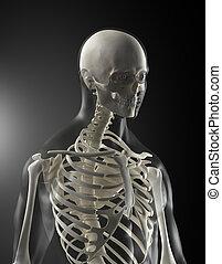 corps, monde médical, humain, balayage