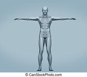 corps, numérique, gris, squelette, muscles