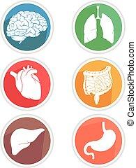 corps, organes, humain, icône