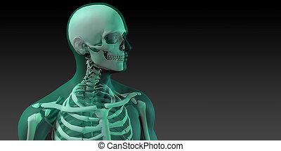 corps, os, monde médical, humain, illustration
