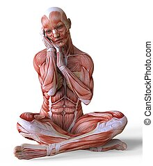 corps, peau, muscles, isolé, illustration, anatomie, sans, femme, blanc, 3d