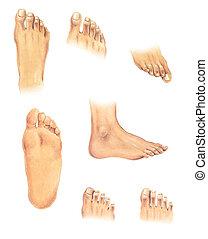corps, pieds, parts: