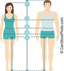 corps, plat, entiers, measurements., parameters, proportions., mesures, lignes, illustration, longueur, vecteur, tailles, humain, mesure, homme, femmes, design.