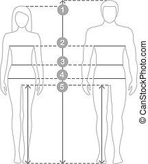 corps, proportions., entiers, measurements., parameters, tailles, mesures, lignes, illustration, longueur, vecteur, humain, mesure, homme, contour, femmes