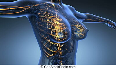 corps, science, anatomie, boucle, humain