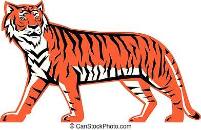 corps, tigre bengale, mascotte, entiers