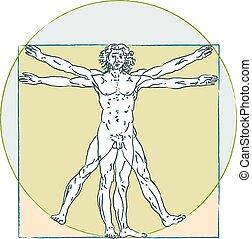 corps, vinci, vitruvian, proportions, da, standard., humain, leonardo, man.