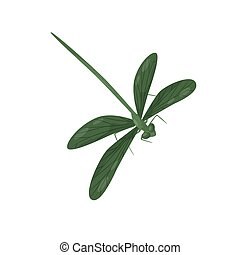 corps, wings., creature., plat, fragile, fast-flying, long, deux, insecte, vecteur, vert, petit, paires, dragonfly., clair, icône