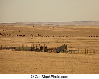 Corrals and Cattle on the Prairie