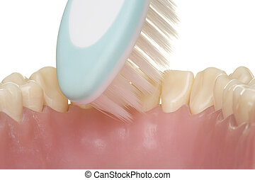 correct use of the toothbrush for perfect oral hygiene