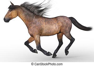 correndo, cavallo, isolato