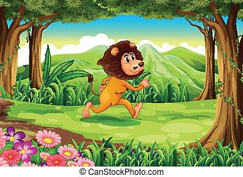 correndo, leone, giungla