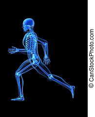correndo, uomo, anatomia