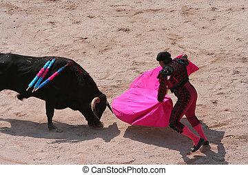 corrida / bullfight