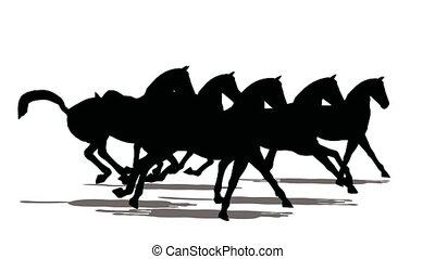 corrida, de, pequeno, rebanho cavalos, pretas, silueta,...