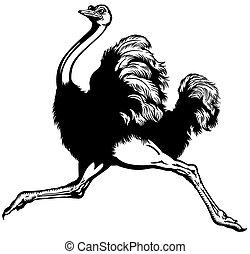 corriente, avestruz