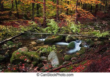 corriente, en, bosque de otoño