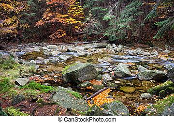 corriente, en, otoño, montaña, bosque