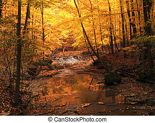 corriente, otoño