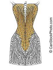 corset isolated on white background. 10 EPS
