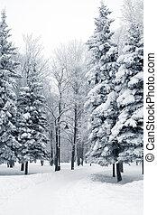 corsia, parco, inverno