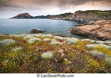 corsica, linea costiera
