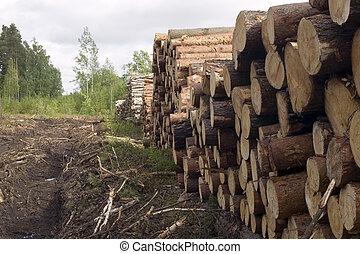 corte, árboles, en, naturaleza, plano de fondo