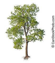 corte, árvore, isolado, raizes