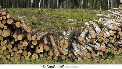 corte, árvores, em, natureza, fundo