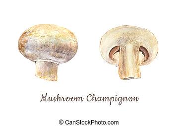 corte, entero, acuarela, botánico, fondo blanco, hongo, ilustración, champignon