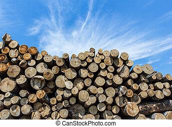 corte, pilha, madeira