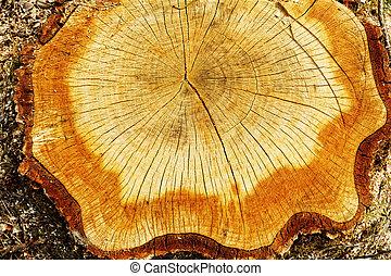 corte, tronco, árbol, afuera