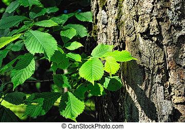 Cortex of tree